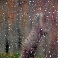 Суслик под дождем :: Ирина