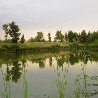 Зеленый пруд :: Мария Богуславская