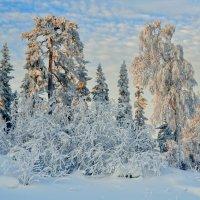 Новогодняя сказка :: vladimir