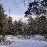 Снегом запорошены сосны и березки... :: Надежда
