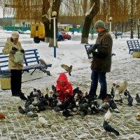 семья и голуби :: юрий иванов