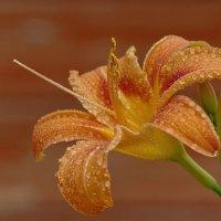 Цветы моего сада! :: Владимир Шошин