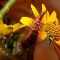 гусеничка на цветке... :: Наталья Меркулова