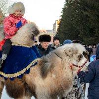 Даша на верблюде. :: Сергей Черепанов