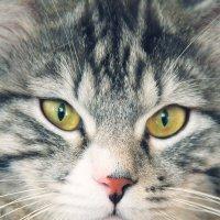 мой котик :: Alex_miao Оля