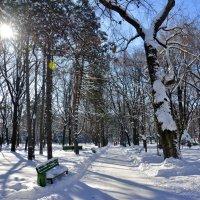 Кафедральный Парк, Кишинёв 1.02.2014 г. :: Леонид Школьный
