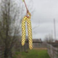 Весна идёт :: Сергей Аверьянов