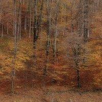Краски осени :: Владимир Сарычев