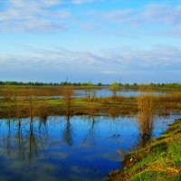 Весенние разливы :: Виктор Гузеев