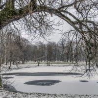 Мокрый снег, временами дождь. :: Valeriy Piterskiy