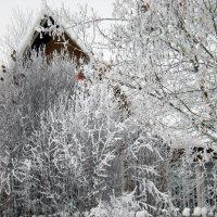зима в деревне :: Наталья Ерёменко