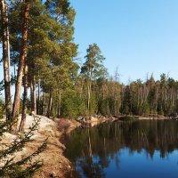 Лесное озеро :: Андрей Звягин