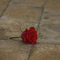 Роза :: Наталья Краснюк