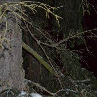 ночной лес :: Оля Ковалева