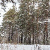 Зимний лес :: Евгений Мельников
