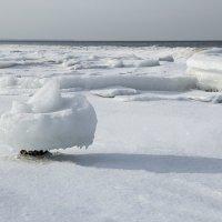 Ледяная шляпка :: Борис Безбородов
