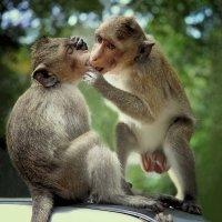 Поцелуй... :: Анна Корсакова