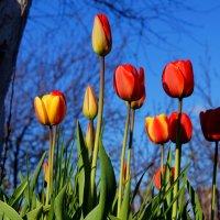 весна пишла :: gribushko грибушко Николай