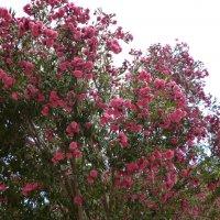 Цветы Кипра :: Ольга Мишустина