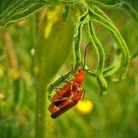 Из жизни насекомых :: Наталия Короткова