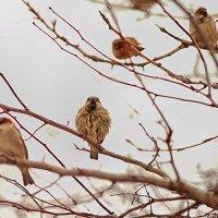 Злые птички ) :: Светлана Янюшкина