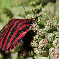 Красное и чёрное. :: Edward J.Berelet