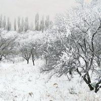 Цветут и зимние сады :: Александр Бурилов