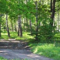 Дорога в лесу :: Александр Яковлев