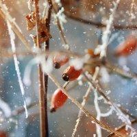 Зимняя сказка 1 :: Мария Колина