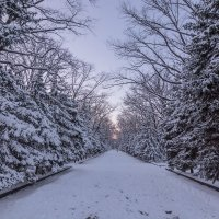 Зима в Харькове :: Boris Belocerkovskij