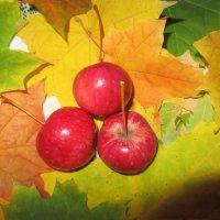 Осенний натюрморт :: Анна Абашева
