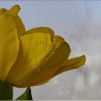 Ожидание весны :: galina tihonova