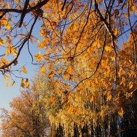 Осень :: Владимир Воробьев