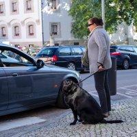 собака :: Alexey Bogatkin