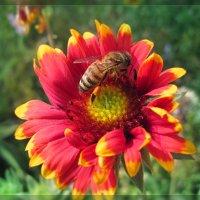 Пчелка :: Vladlena Bolgova
