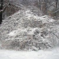 Не проехать ,ни пройти ,лишь на лыжах обойти -;)) :: Александр Запылёнов