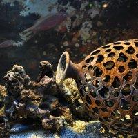 подводный мир :: Светлана