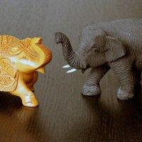 Загадка 1: Какой слоник тайский, какой индийский? Ответ будет завтра ))) :: Владимир Шибинский