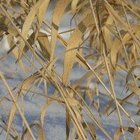 Колпинский бамбук :: Дмитрий Прокофьев
