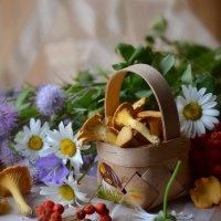 Летний этюд. :: Романенко Людмила Ивановна
