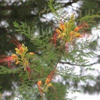 Цікаве дерево :: Ludmila Пир