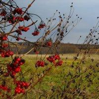 ...осень.... :: Ира Егорова :)))