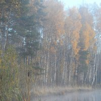 В тумане утреннем берёзовая роща... :: Юрий Цыплятников