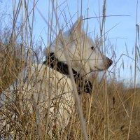 Айс в траве :: Вовка СК