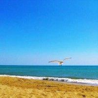 Пляж :: Игорь Хатаб