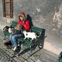 Стамбул- город кошек :: kirm2 .