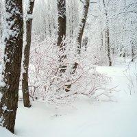 Снежный кустик :) :: Елена Перевозникова