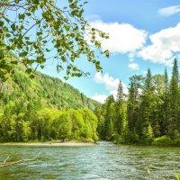 На таёжной реке :: юрий Амосов