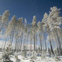 Зима :: Владимир Большаков