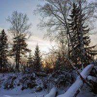 под снегом :: Дамир Белоколенко
